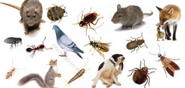 مكافحة الحشرات بالطرق الآمنة